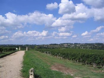bordeauxvignoble01